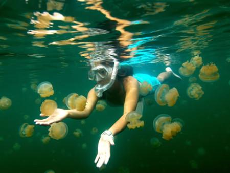 jellyfishlake01