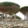 「竜血樹」でキャンプファイヤー!〜伝説の島に伝わる「竜の血」を入手せよ〜